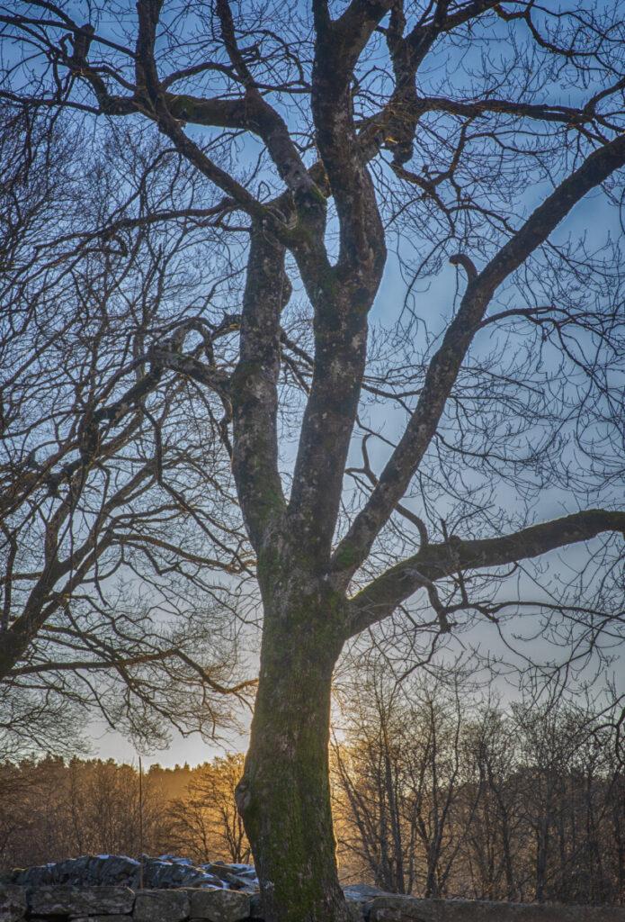 Natur, trær